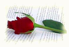 rosa-y-libro.jpg
